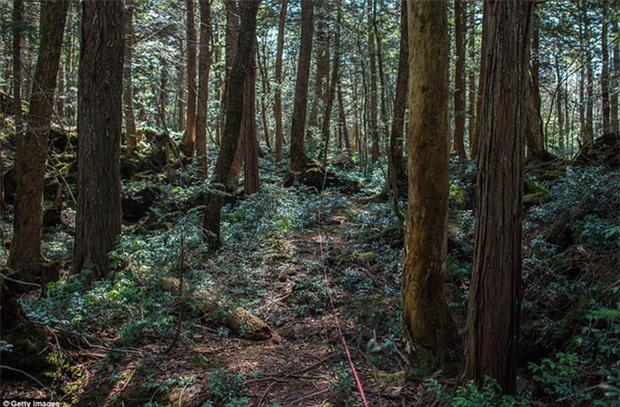 Khu rừng tự sát Aokigahara và những câu chuyện rùng rợn - Ảnh 5.