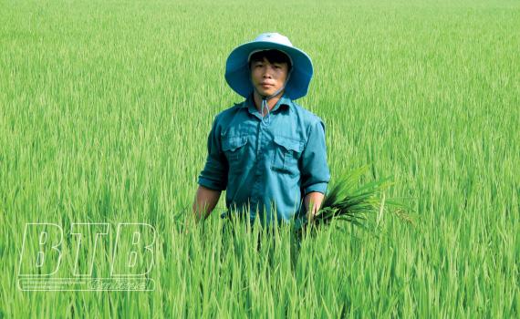 Thái Bình: Bỏ nghề lái xe, 9X về quê cấy lúa đặc sản trên cánh đồng thẳng cánh cò bay 24ha mà thành tỷ phú - Ảnh 1.