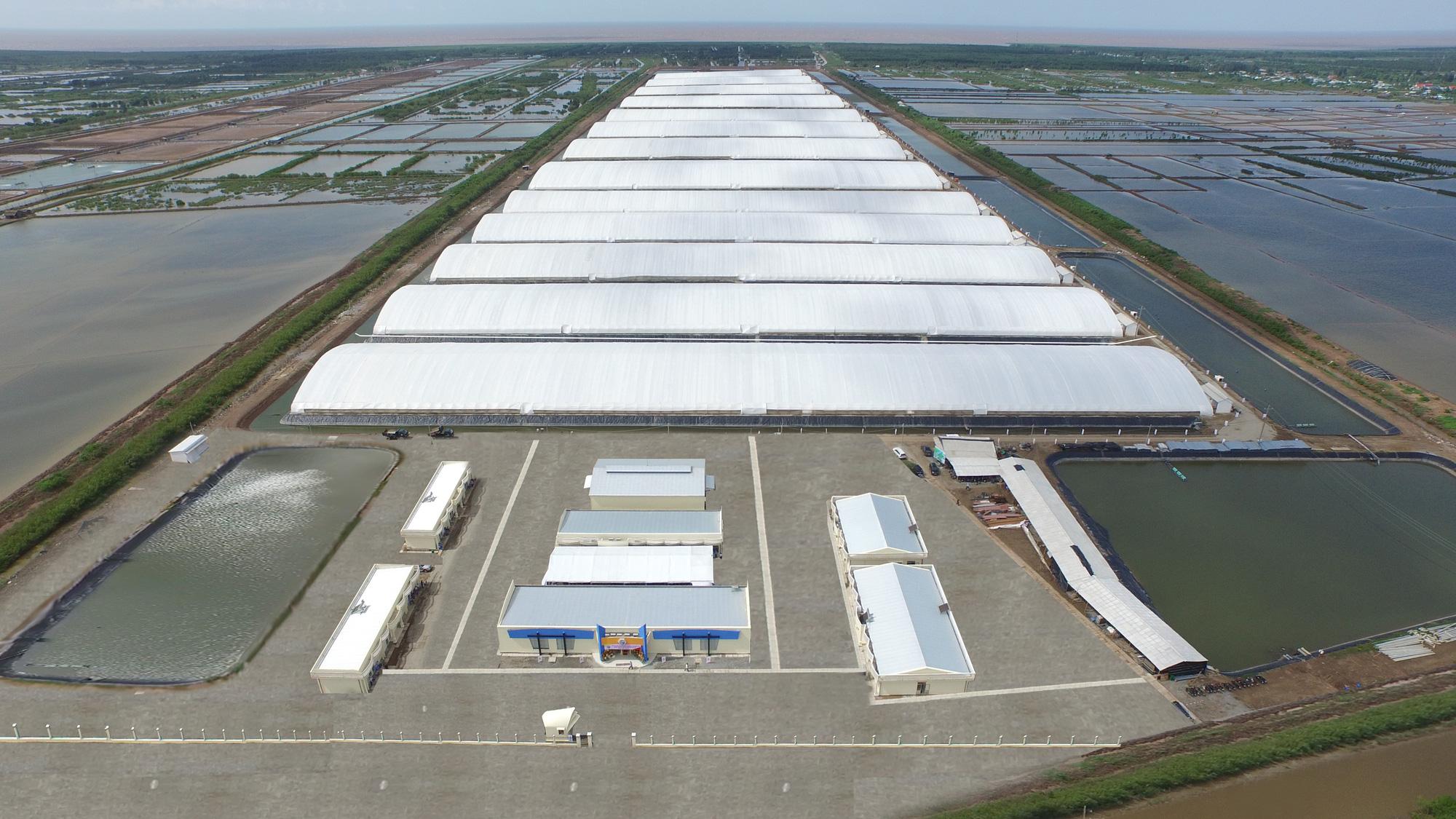 Khu nuôi tôm ứng dụng công nghệ cao của Tập đoàn Việt - Úc đạt các chứng nhận quan trọng - Ảnh 2.