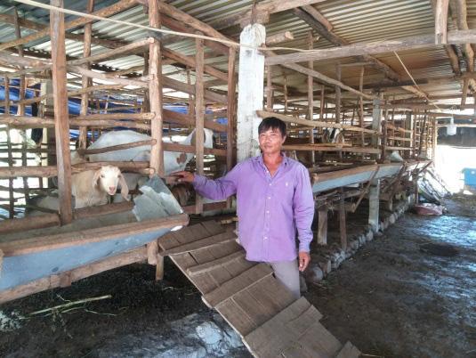 Phú Yên: Nuôi hàng trăm con tai dài chỉ ăn cỏ uống nước lã, ông nông dân này giàu có - Ảnh 1.
