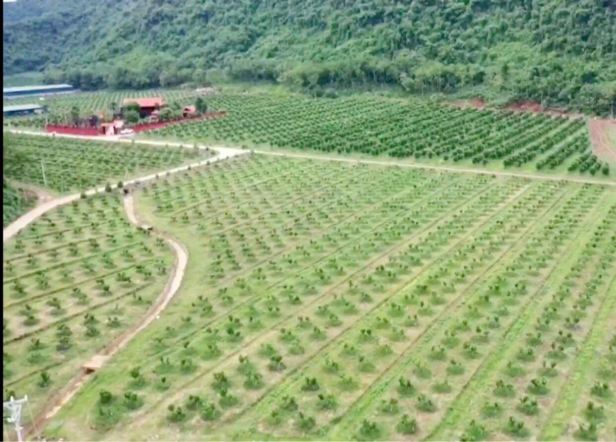 Thanh Hóa: Bỏ phố lên núi trồng 30.000 gốc cam, bưởi…thu 2 tỷ/năm - Ảnh 4.