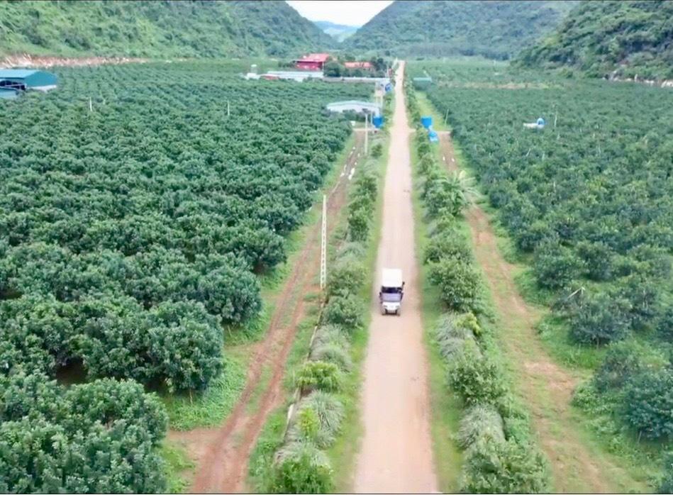 Thanh Hóa: Bỏ phố lên núi trồng 30.000 gốc cam, bưởi…thu 2 tỷ/năm - Ảnh 1.