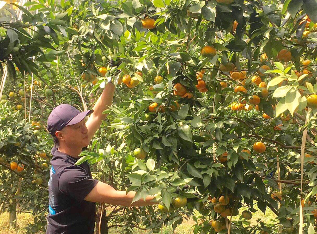 Thanh Hóa: Bỏ phố lên núi trồng 30.000 gốc cam, bưởi…thu 2 tỷ/năm - Ảnh 2.