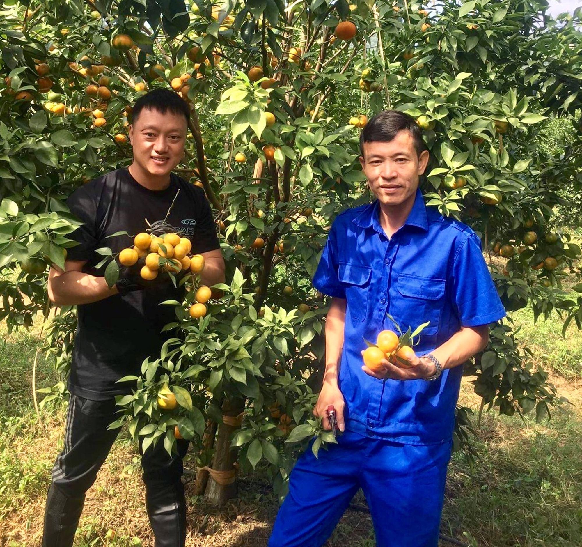 Thanh Hóa: Bỏ phố lên núi trồng 30.000 gốc cam, bưởi…thu 2 tỷ/năm - Ảnh 5.