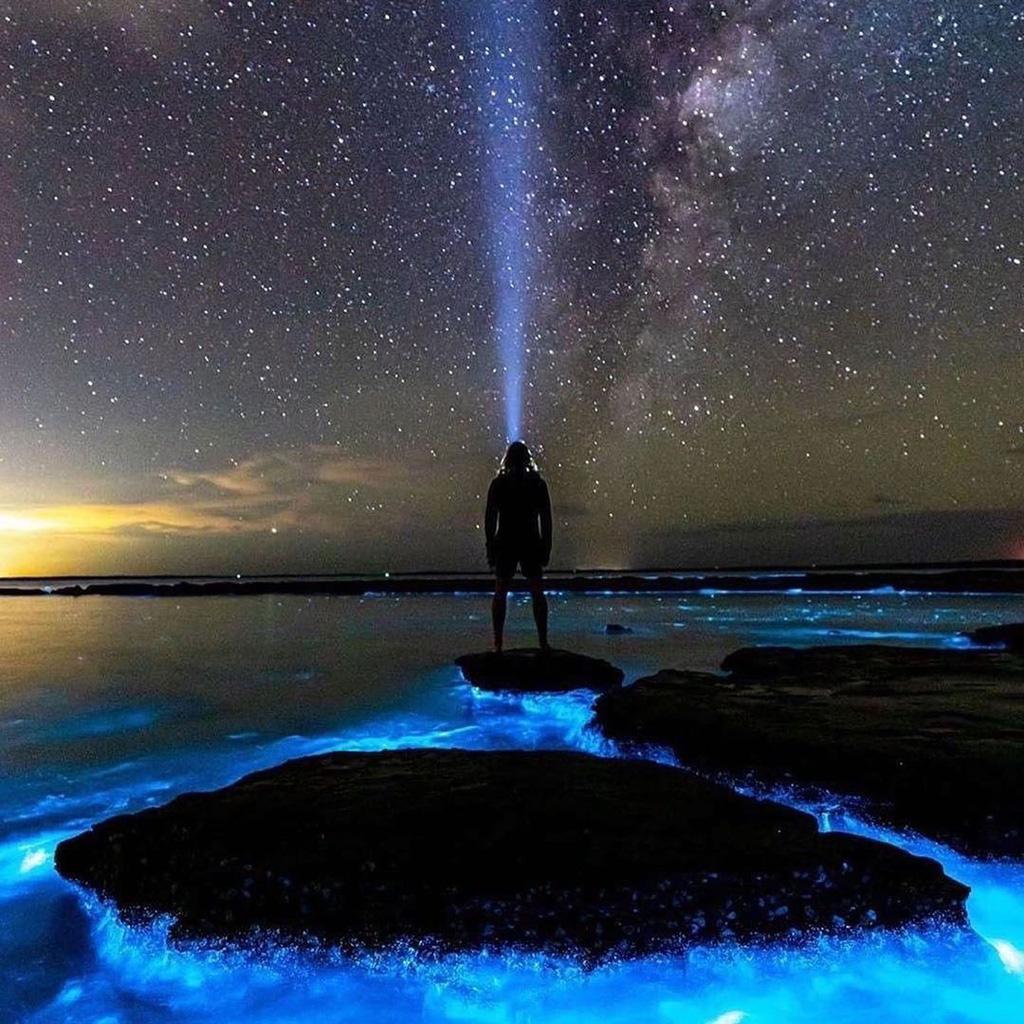 Ảnh: Tảo phát quang khiến bãi biển rực sáng vào ban đêm - Ảnh 4.