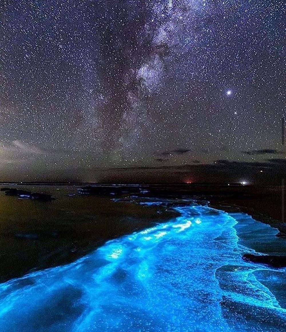Ảnh: Tảo phát quang khiến bãi biển rực sáng vào ban đêm - Ảnh 10.