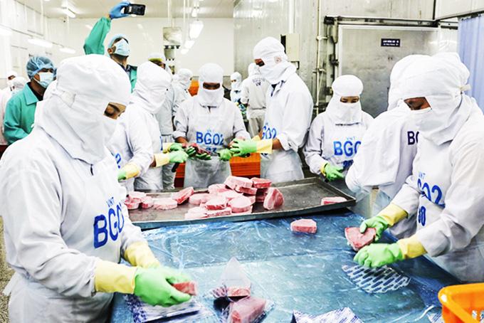 Vì sao 1 tỉnh có biển như Khánh Hòa mà doanh nghiệp vẫn phải mua cá ngừ đại dương từ nước ngoài về chế biến? - Ảnh 1.