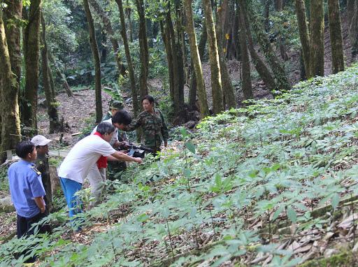 Ninh Bình, Quảng Nam xin chuyển diện tích rừng làm nhà máy xi măng, đường giao thông, Bộ NNPTNT từ chối - Ảnh 1.