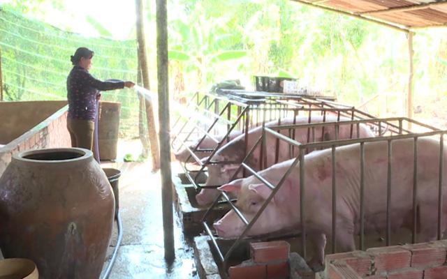 Cuối năm, dịch bệnh vẫn thách thức ngành chăn nuôi - Ảnh 2.