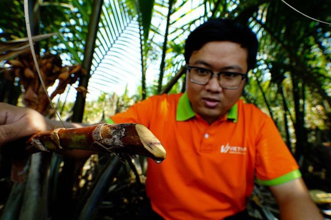 Có một không hai ở Việt Nam: Anh kỹ sư hot boy bắt cây dừa nước tiết ra mật - Ảnh 4.