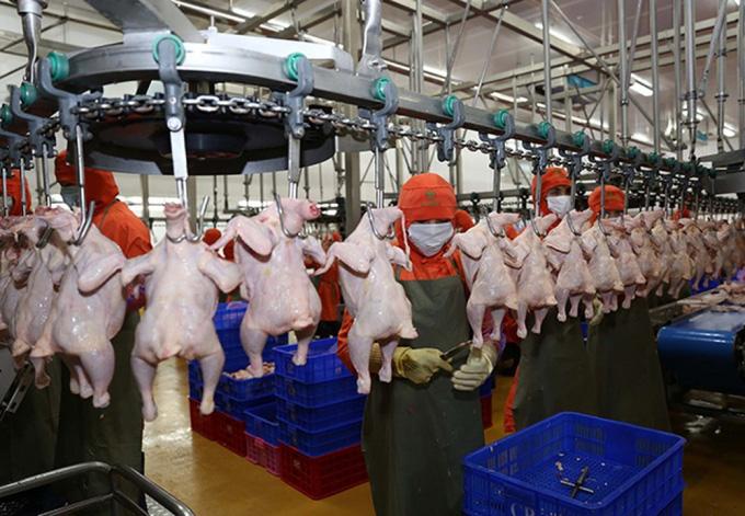 """Thịt gà Việt Nam sắp """"vi vu"""" Singapore và Hong Kong - Ảnh 1."""