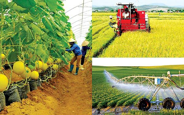 Bài 3: Nên trao quyền thực hiện bảo hiểm rủi ro nông nghiệp cho hợp tác xã - Ảnh 1.