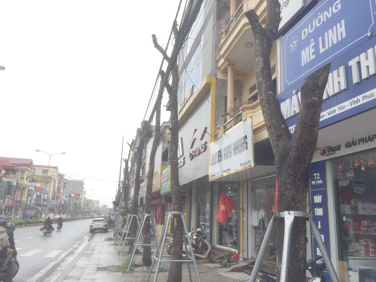Vĩnh Phúc: La liệt cây xanh bị cụt ngọn, chết khô trên tuyến đường trung tâm thành phố - Ảnh 12.