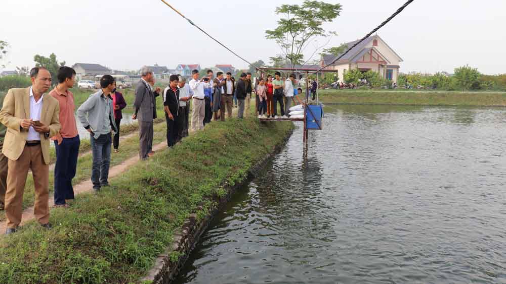 Bắc Giang: Nuôi cá phô phi đực 100% áp dụng công nghệ cao, sao nhiều người đến xem thế - Ảnh 4.