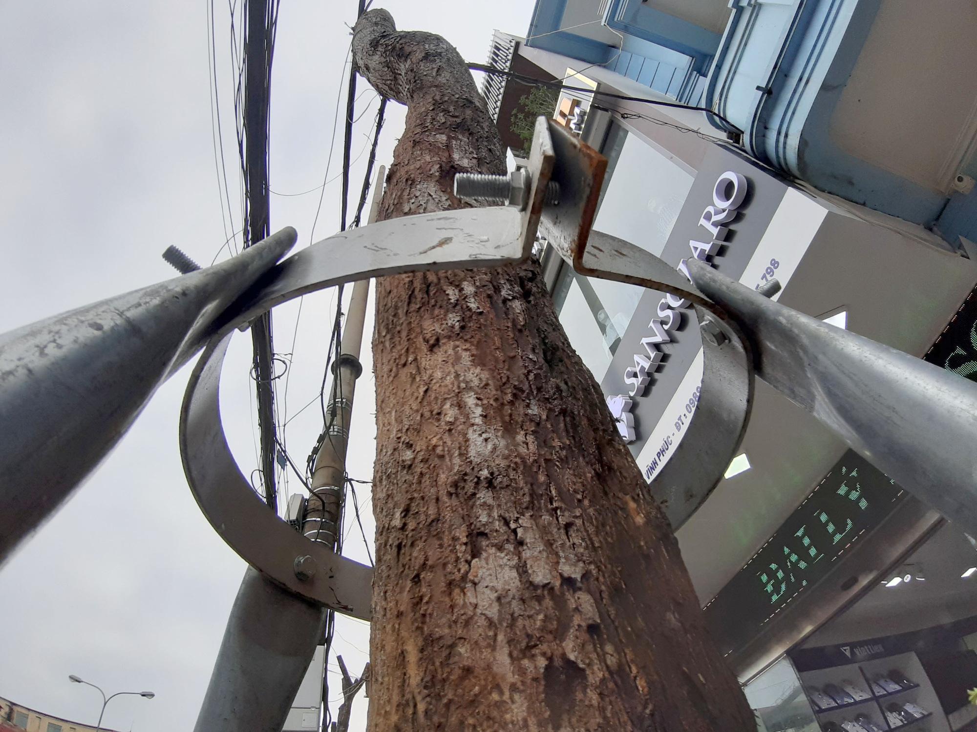 Vĩnh Phúc: La liệt cây xanh bị cụt ngọn, chết khô trên tuyến đường trung tâm thành phố - Ảnh 6.