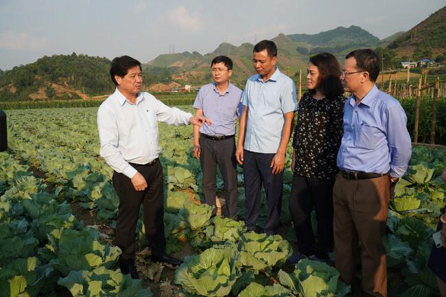 Việt Nam đứng đầu ASEAN về thuốc bảo vệ thực vật sinh học - Ảnh 1.