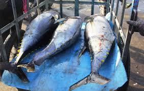 Bình Định đề nghị phối hợp xử lý 2 tàu cá vi phạm vùng biển nước ngoài - Ảnh 1.