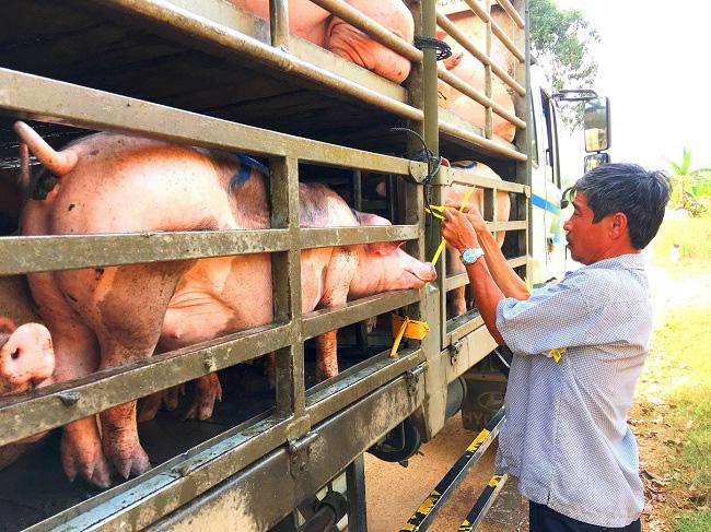 Giá lợn hơi hôm nay (20/11): Chỉ giảm nhẹ 1.000 đồng/kg ở một số địa phương - Ảnh 2.