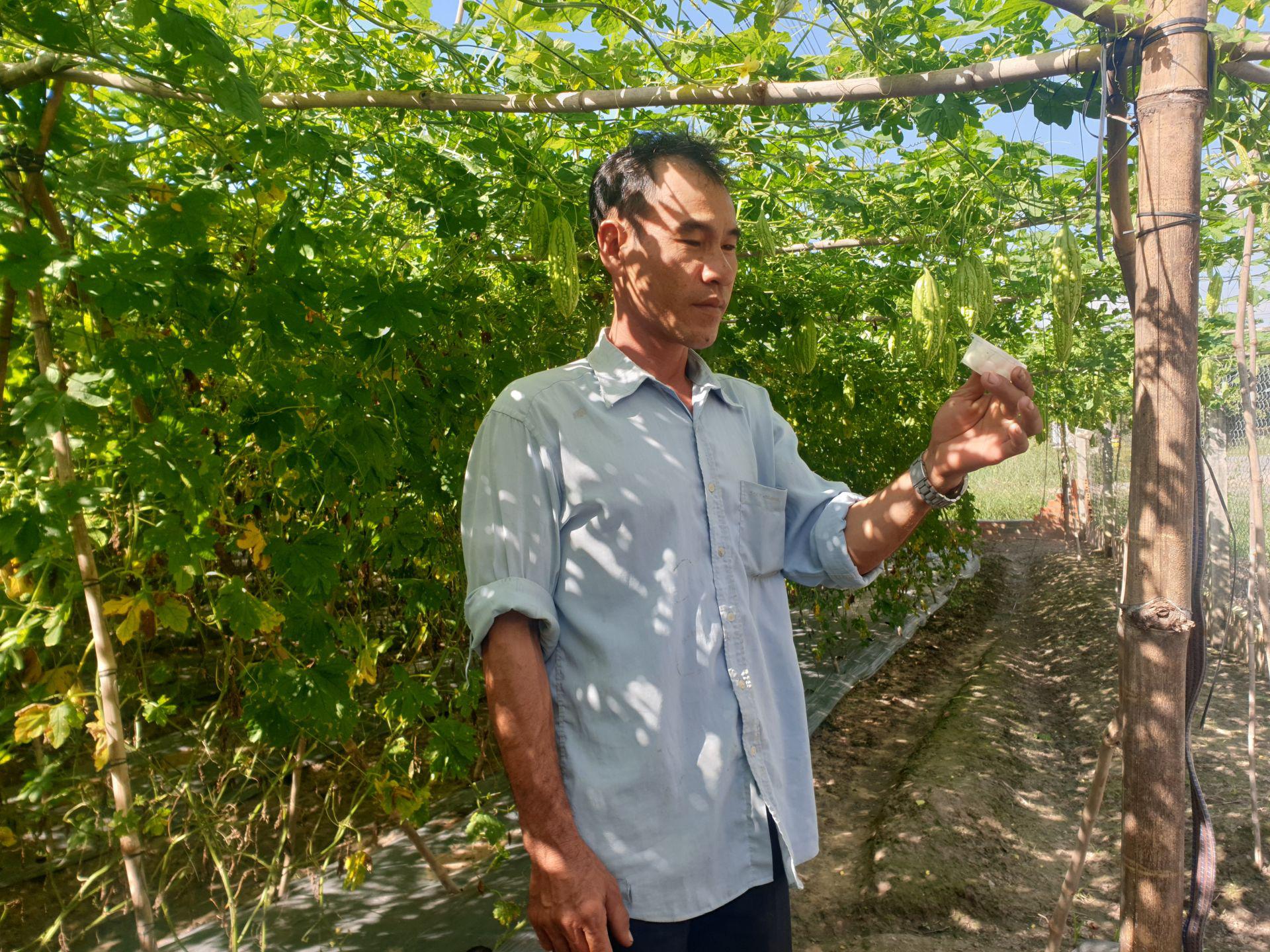 Tây Ninh: Ông nông dân dùng thứ cây có mùi lạ để đuổi côn trùng, cây ra trái bự ngon sạch không có mà bán - Ảnh 1.