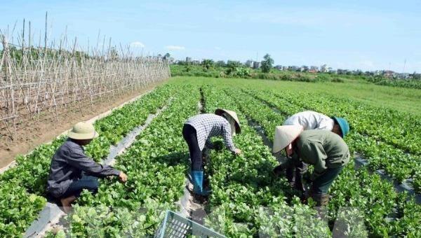 Năm 2020: Thu nhập nông dân Hà Nội dự kiến đạt 55 triệu đồng/người - Ảnh 1.