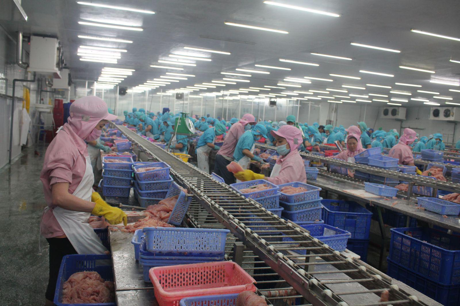 ĐBSCL: Vì sao giá cá tra lại tăng mạnh - Ảnh 1.
