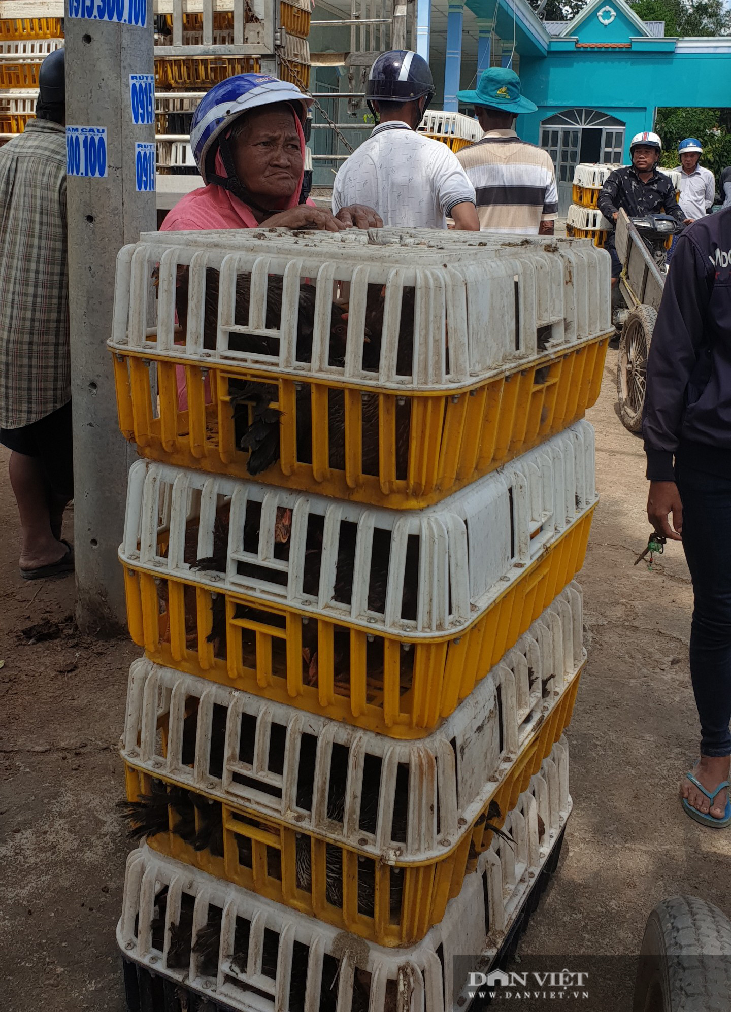 Trà Vinh: Người dân xã nghèo vui mừng đi nhận gà đẻ về nuôi miễn phí - Ảnh 6.