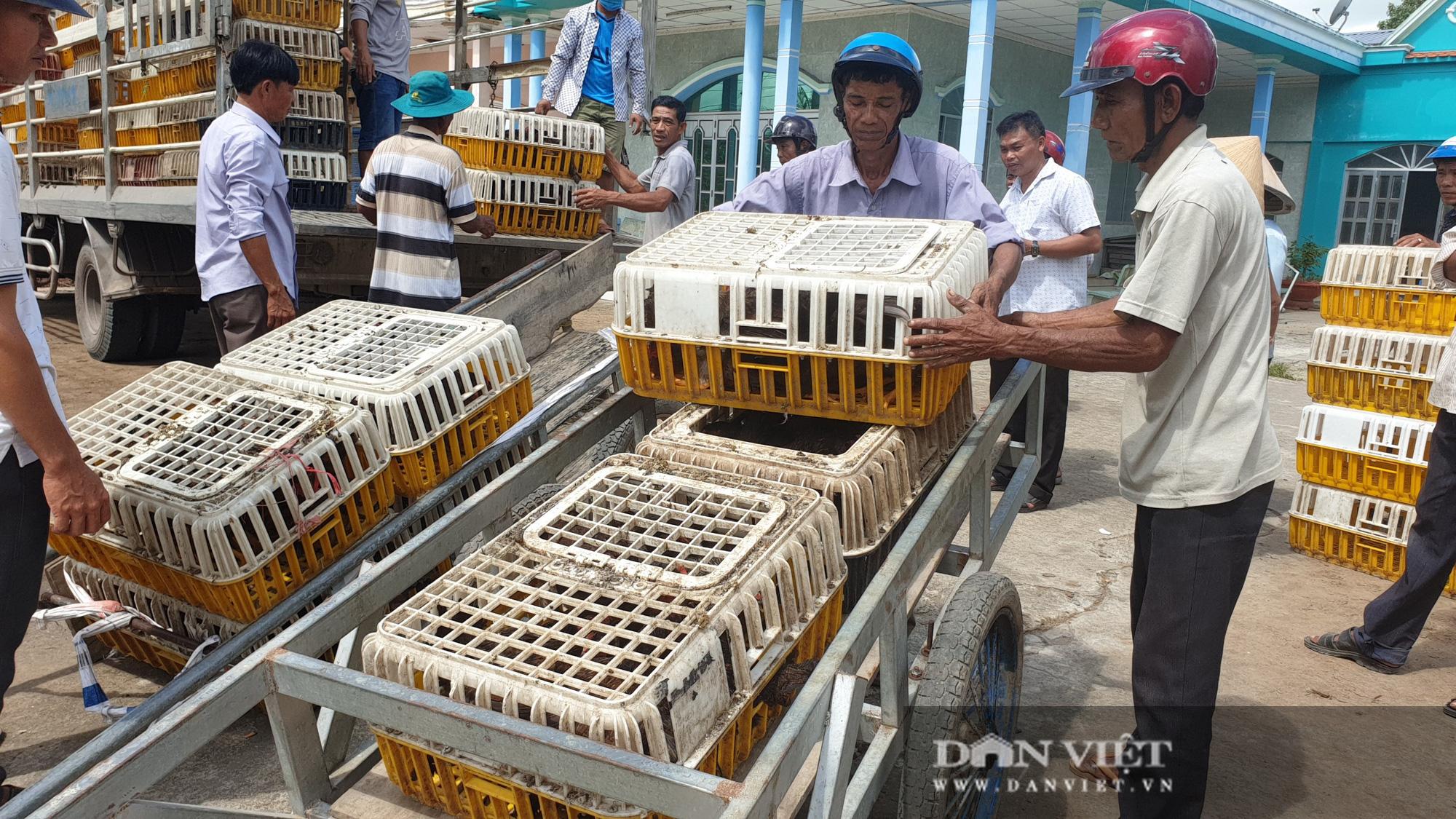 Trà Vinh: Người dân xã nghèo vui mừng đi nhận gà đẻ về nuôi miễn phí - Ảnh 7.