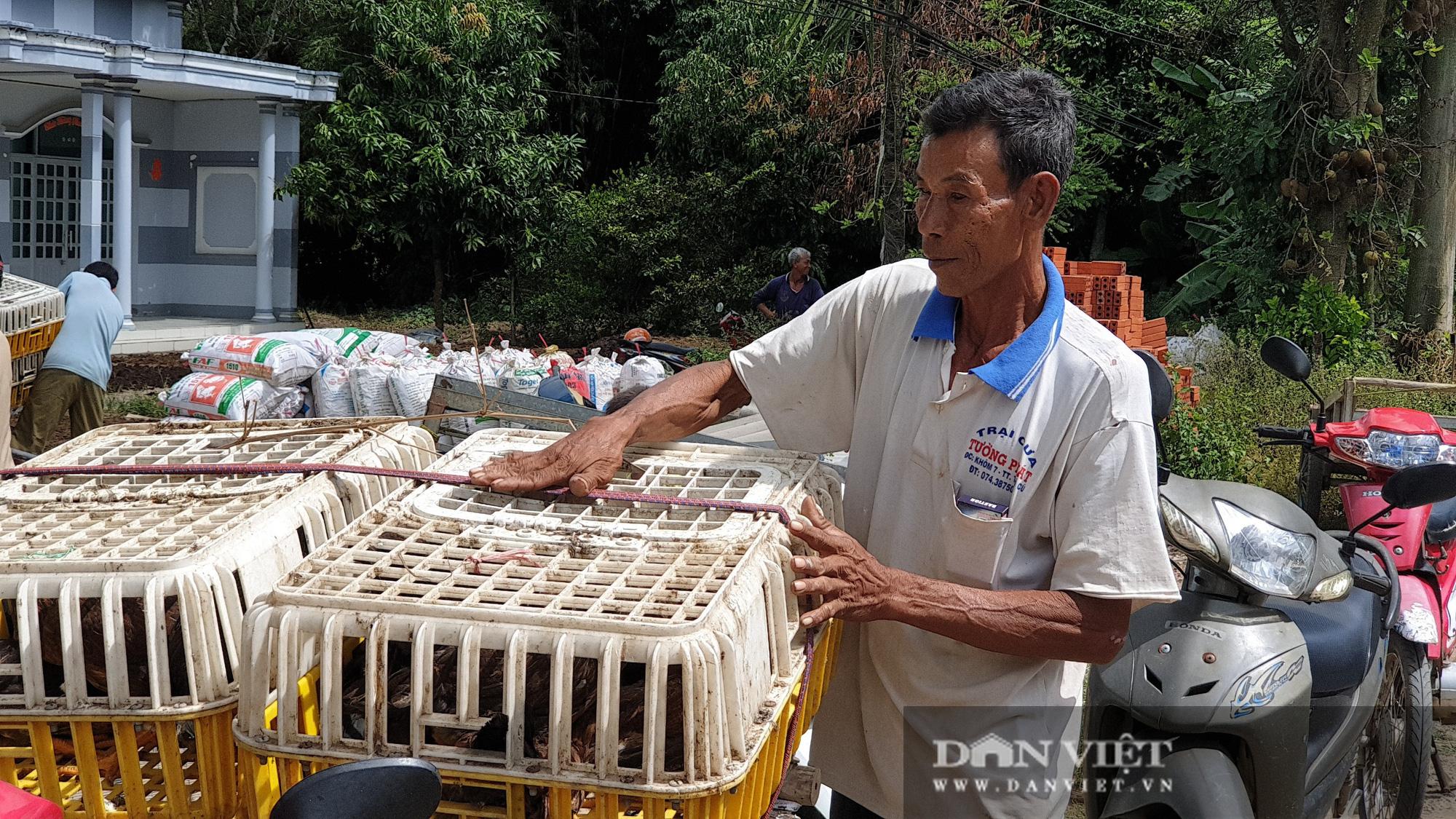 Trà Vinh: Người dân xã nghèo vui mừng đi nhận gà đẻ về nuôi miễn phí - Ảnh 3.