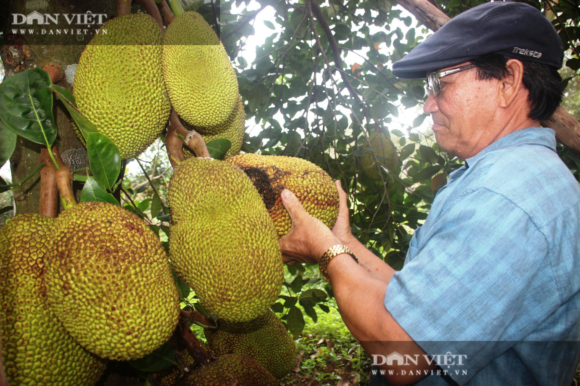 Nông dân được Thủ tướng tặng Bằng khen, nuôi con gì, trồng cây gì… để có doanh thu 2 tỷ đồng/năm? - Ảnh 3.