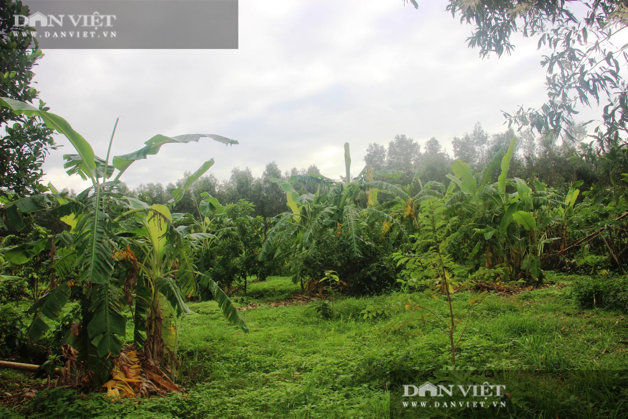 Nông dân được Thủ tướng tặng Bằng khen, nuôi con gì, trồng cây gì… để có doanh thu 2 tỷ đồng/năm? - Ảnh 7.