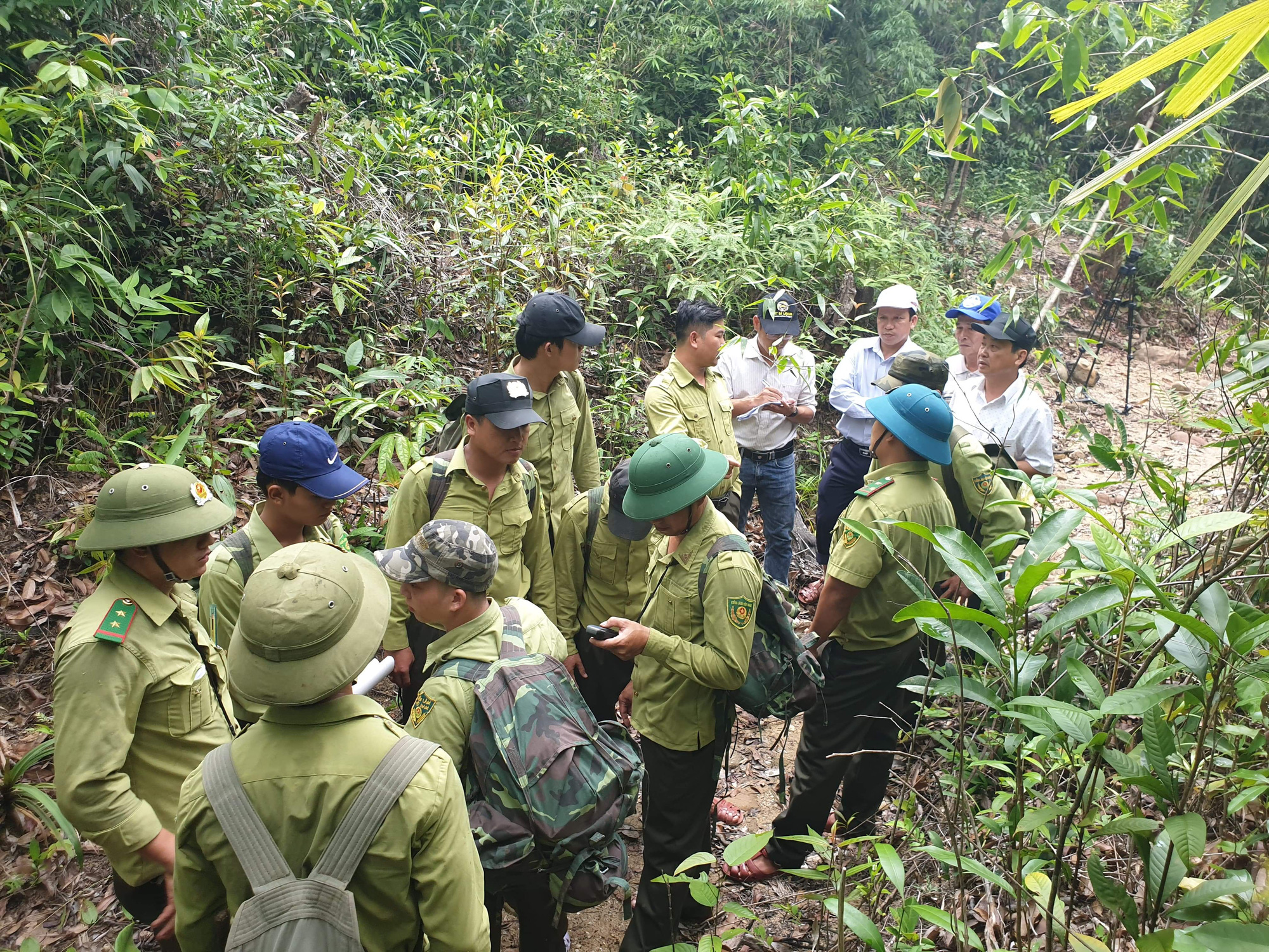 Quỹ Bảo vệ và phát triển rừng Quảng Nam - Vượt khó để hoàn thành nhiệm vụ - Ảnh 1.