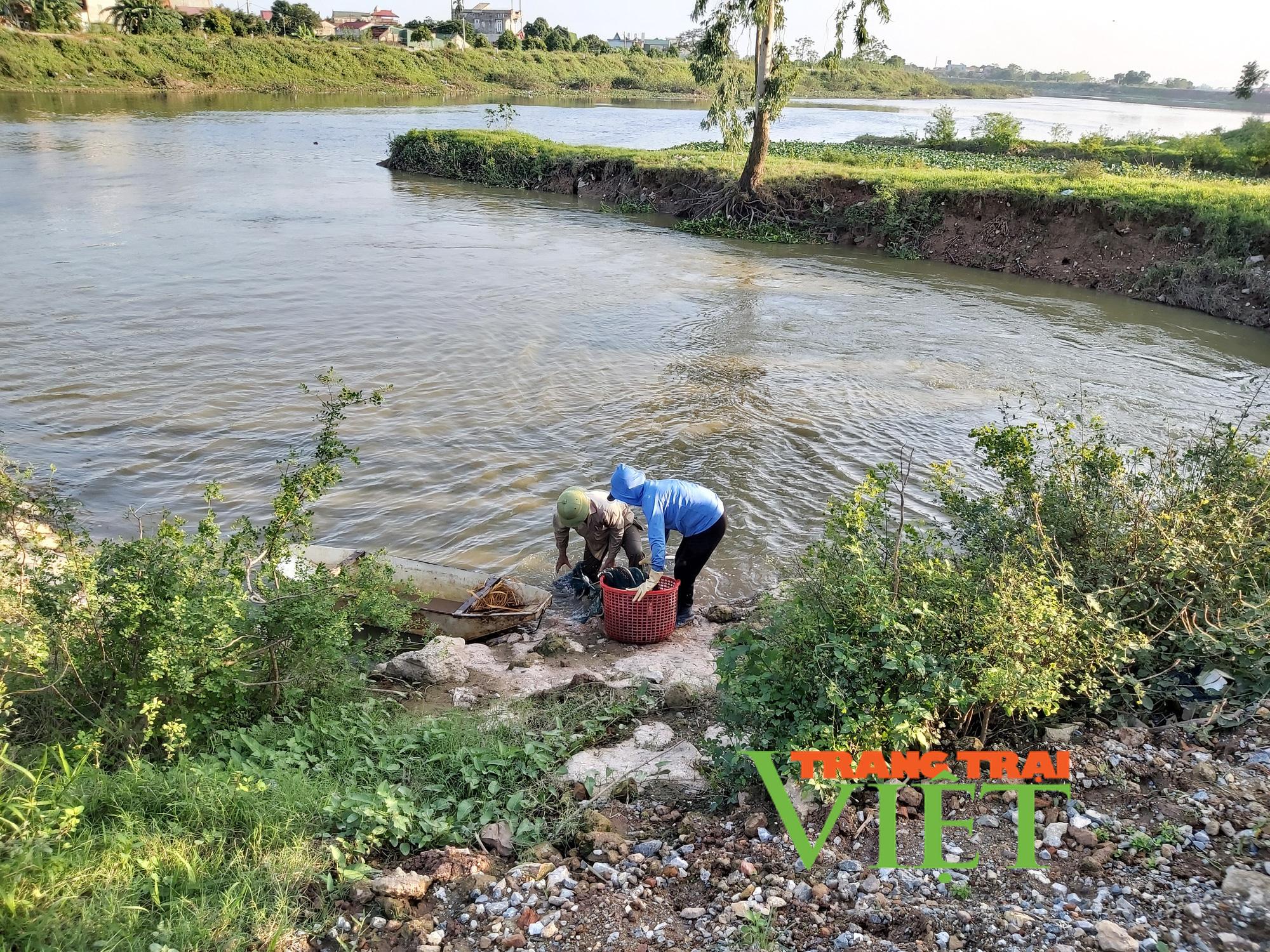 Hà Nội: Lão nông U50 thả nuôi ba ba gai cùng cá chuối hoa,  - Ảnh 3.