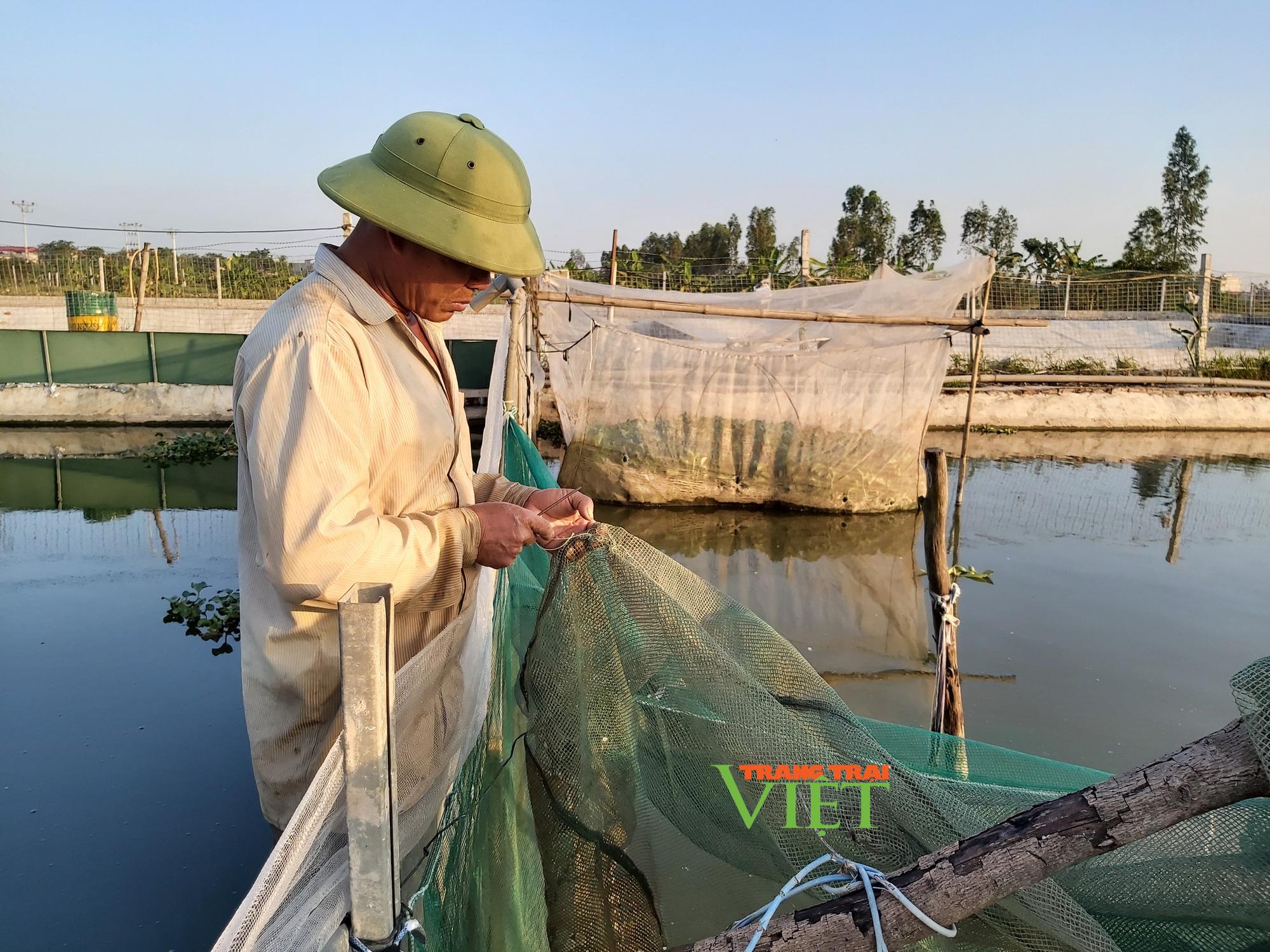 Hà Nội: Lão nông U50 thả nuôi ba ba gai cùng cá chuối hoa,  - Ảnh 13.