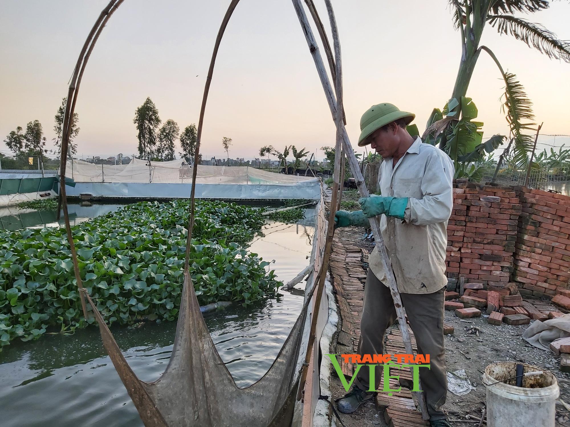 Hà Nội: Lão nông U50 thả nuôi ba ba gai cùng cá chuối hoa,  - Ảnh 10.