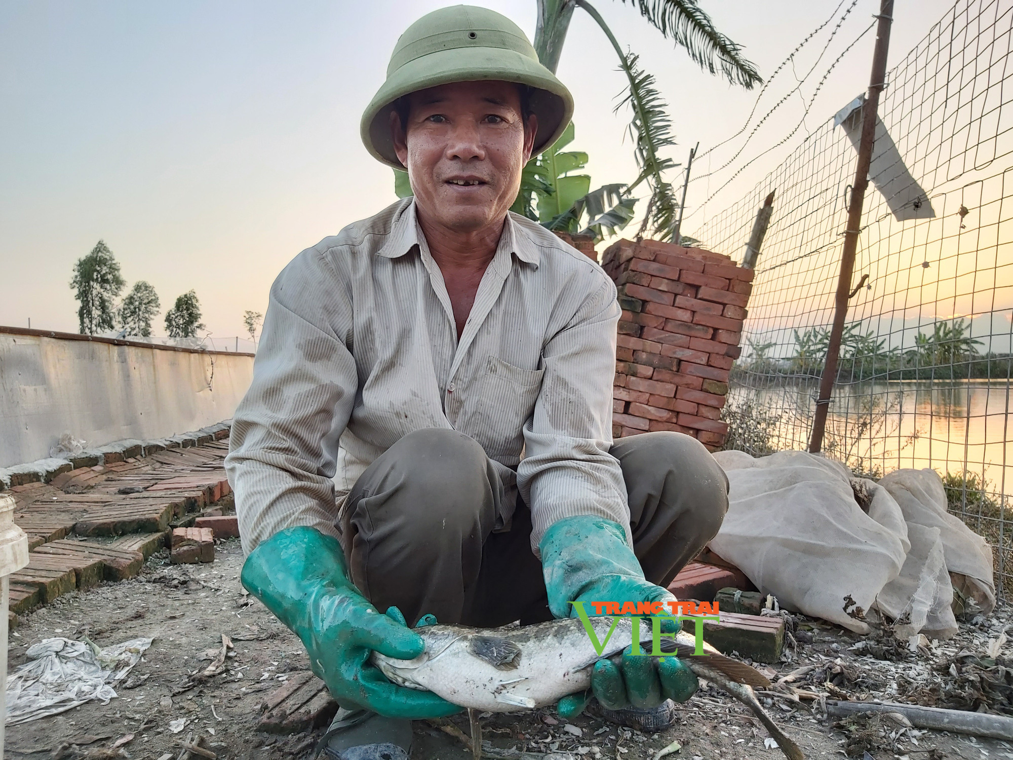 Hà Nội: Lão nông U50 thả nuôi ba ba gai cùng cá chuối hoa,  - Ảnh 12.