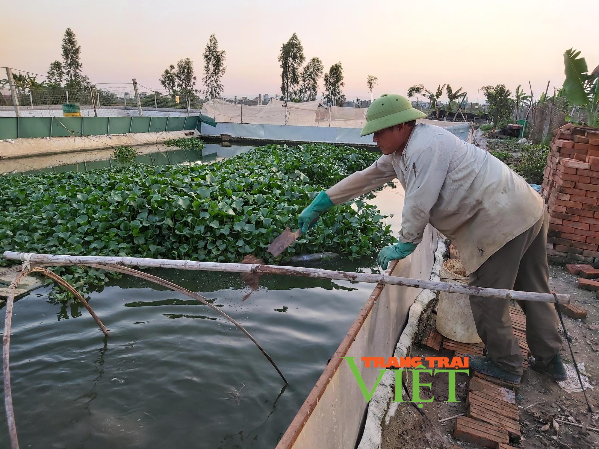 Hà Nội: Lão nông U50 thả nuôi ba ba gai cùng cá chuối hoa,  - Ảnh 6.