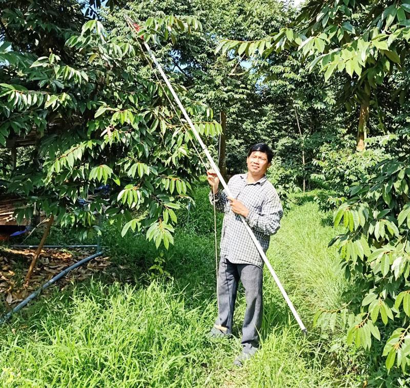"""Một nông dân tỉnh Bến Tre """"sáng chế"""" ra cách tạo tán hình chóp """"kích thích"""" cây sầu riêng đậu nhiều trái hơn bình thường - Ảnh 1."""