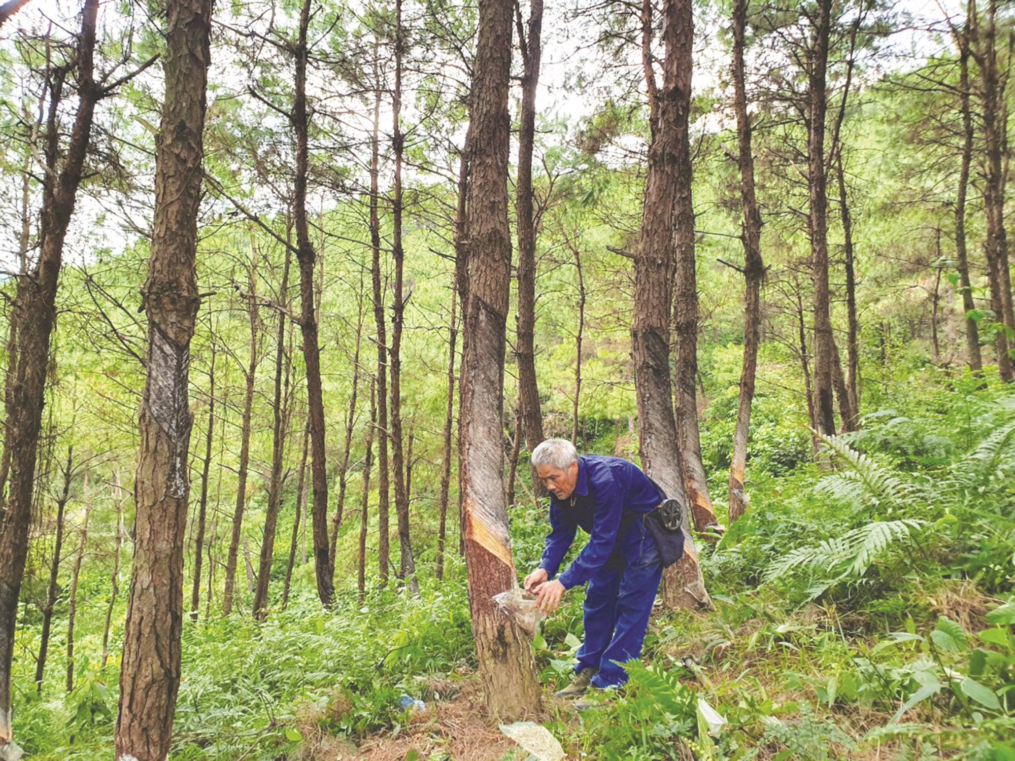 Trồng 1 tỷ cây xanh trong 5 năm, chỉ cần mỗi năm 1 người trồng 2 cây sẽ đủ - Ảnh 2.