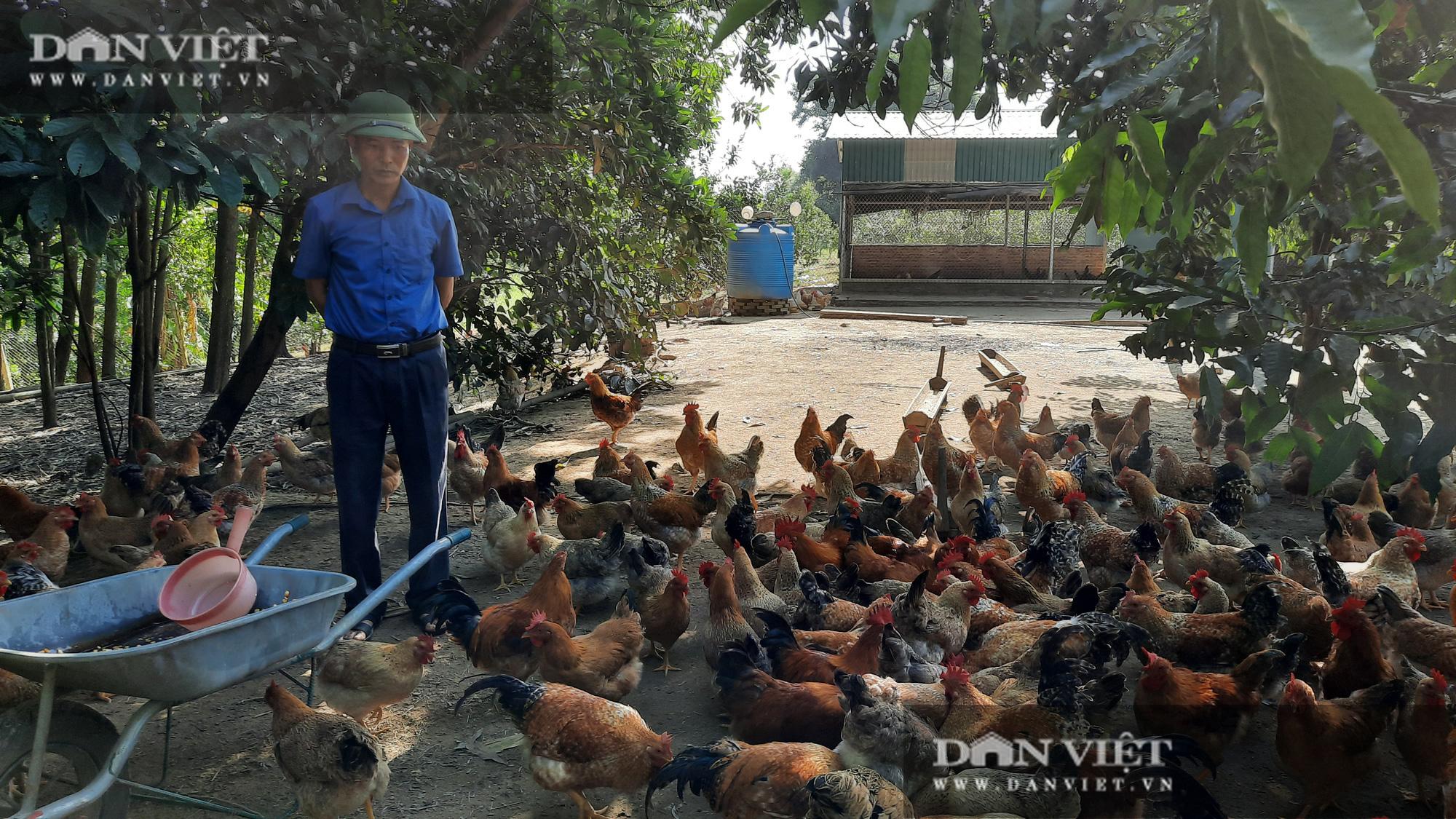 Nuôi gà tiêu chuẩn VietGap, lão nông cho thu nhập hàng trăm triệu mỗi năm - Ảnh 1.