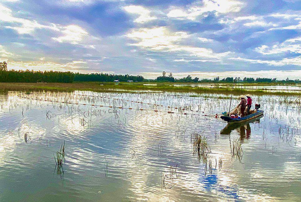 Hậu Giang: Nước rút ra sông, nông dân dùng thứ lưới gì mà kéo bắt hàng tạ ốc bươu vàng, bắt được cả cá lớn? - Ảnh 1.