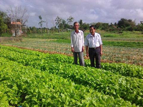 Bến Tre: Quanh năm, tối ngày chỉ trồng rau mà nông dân ở xã này kiếm tiền đều như vắt chanh - Ảnh 1.