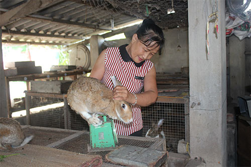 Bình Thuận: Nuôi loài thỏ có màu lông lạ, body bé nhỏ mà tai dài như tai dê, chưa lớn đã có người đòi mua - Ảnh 2.