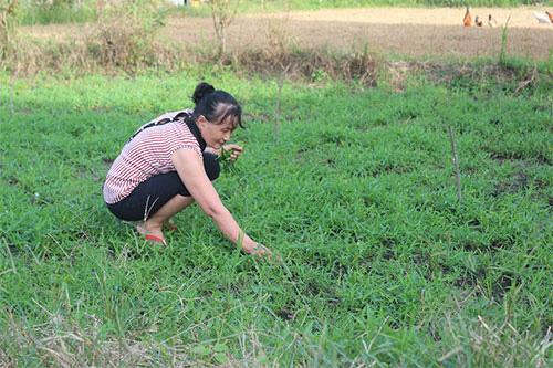 Bình Thuận: Nuôi loài thỏ có màu lông lạ, body bé nhỏ mà tai dài như tai dê, chưa lớn đã có người đòi mua - Ảnh 6.