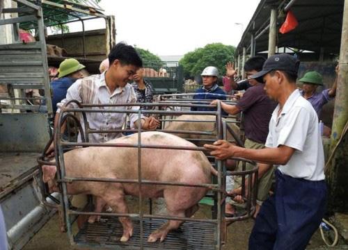 Giá lợn hơi hôm nay (25/11): Một loạt tỉnh thành ghi nhận giảm 4.000 đồng/kg - Ảnh 1.