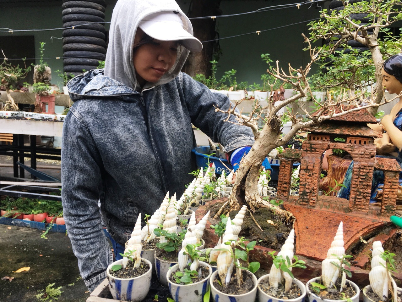 """Độc đáo bộ sưu tập bonsai mini """"khủng"""" đạt kỷ lục thế giới - Ảnh 4."""