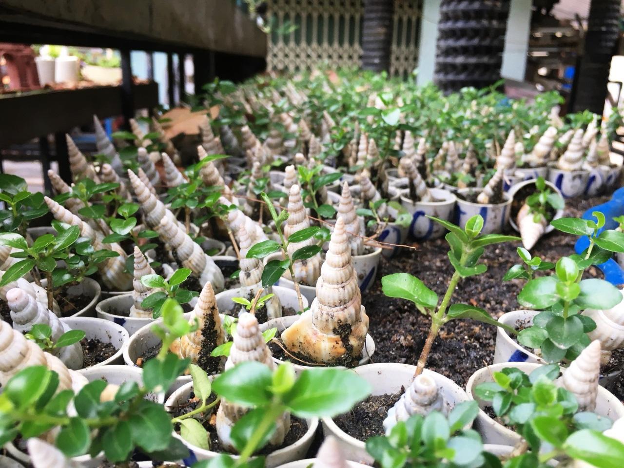 """Độc đáo bộ sưu tập bonsai mini """"khủng"""" đạt kỷ lục thế giới - Ảnh 3."""
