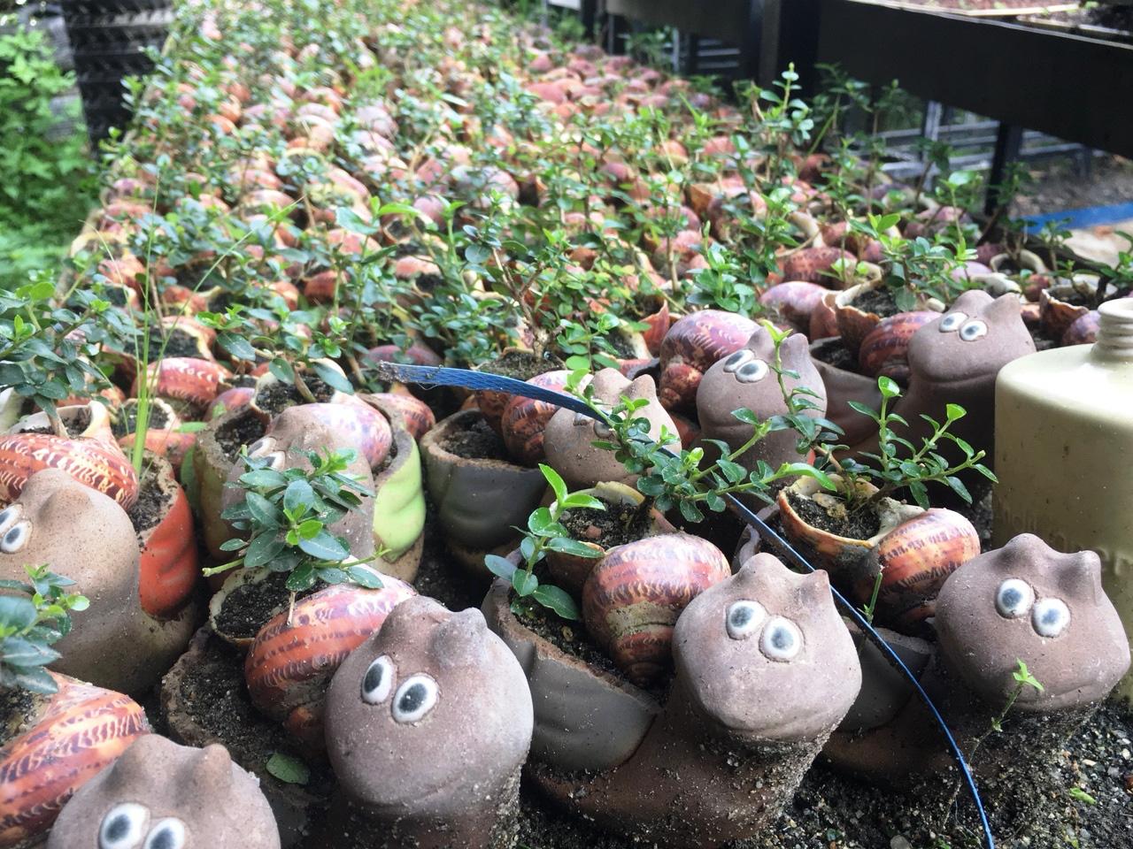 """Độc đáo bộ sưu tập bonsai mini """"khủng"""" đạt kỷ lục thế giới - Ảnh 5."""