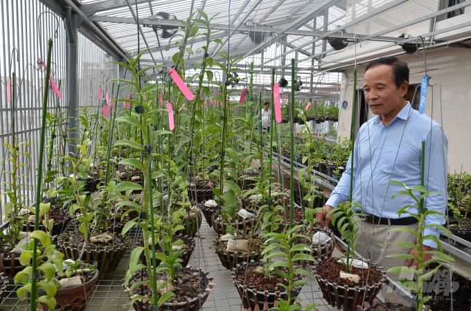 """Phú Thọ: Vườn hoa lan đột biến """"hoành tráng"""" bất ngờ, thân cây lan đột biến to như ngón tay - Ảnh 8."""