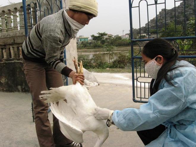 154 nhân viên thú y sắp mất việc, 26 người từng thuộc Chi cục Chăn nuôi và Thú y Hà Nội  - Ảnh 1.