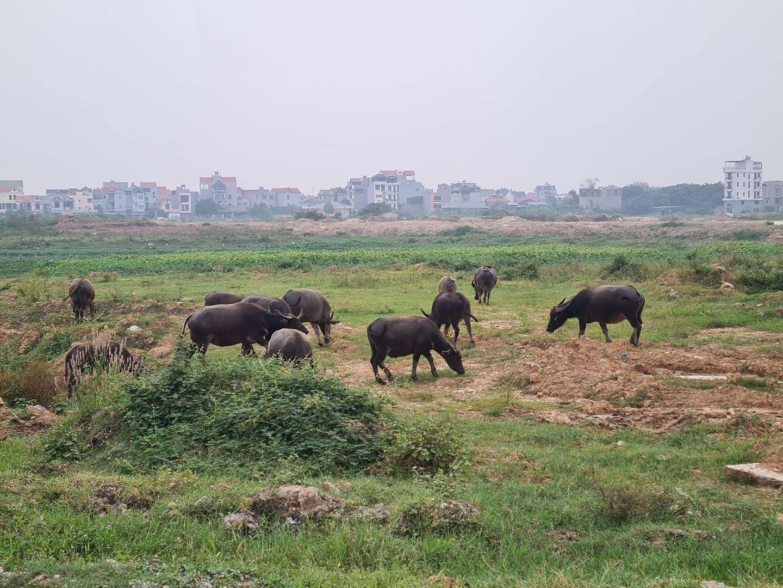 Người ngoại tỉnh mua đất nông nghiệp bỏ hoang sẽ bị thu hồi? - Ảnh 3.
